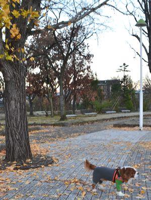 012バラ公園
