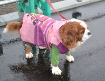 006小雨散歩
