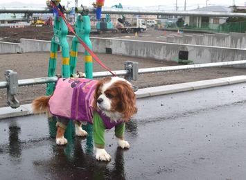 007小雨散歩