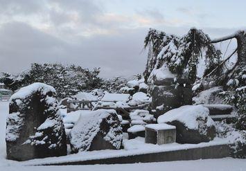 001うっすら雪