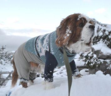 006うっすら雪