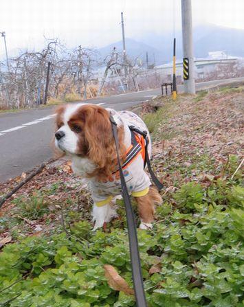 004散歩