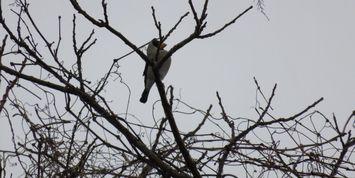 007小鳥