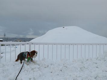 008土山雪