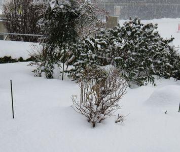 003雪降り