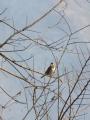 014野鳥
