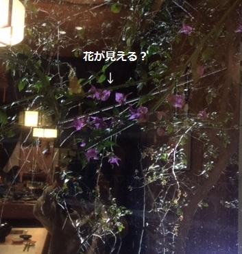 2016Mar3wakayama27.jpg