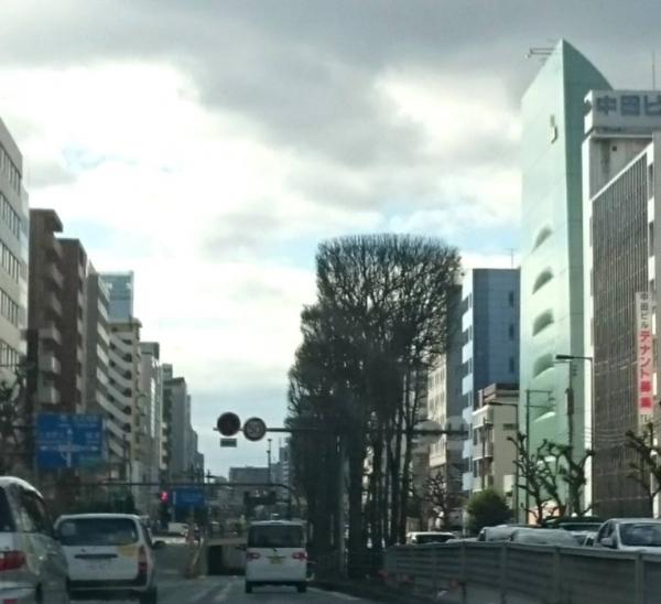 角刈りの街路樹