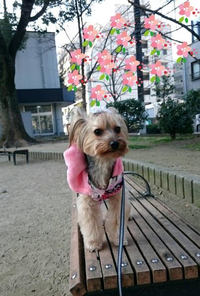 桜と写真を撮る場所は?