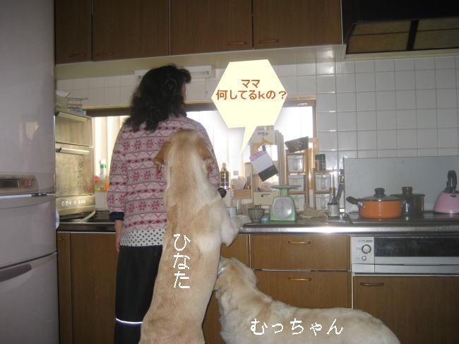 hキッチン