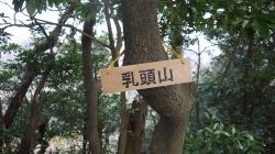 20160305田浦梅林9