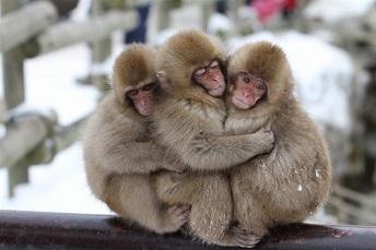 猿 ( ver-1 )