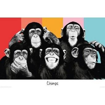 chimps ( ver-1 )