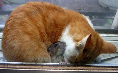 猫とネズミ③