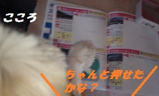 道の駅三河三石-1