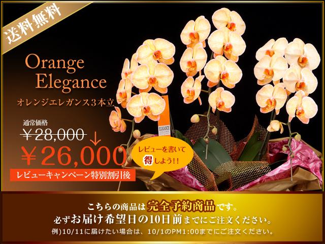 胡蝶蘭 青 オレンジ ピンク 全国 配達 サプライズ