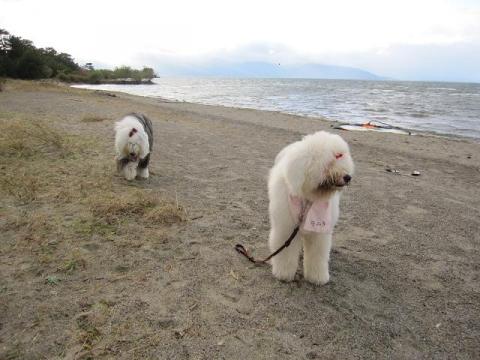 琵琶湖をお散歩