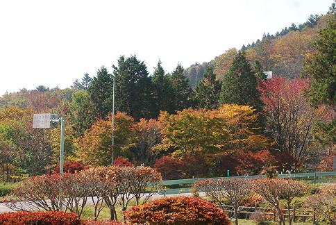 面の木園地の紅葉を楽しむ