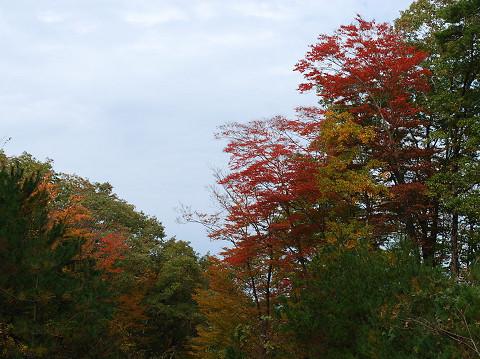 紅葉がきれいな樹木が