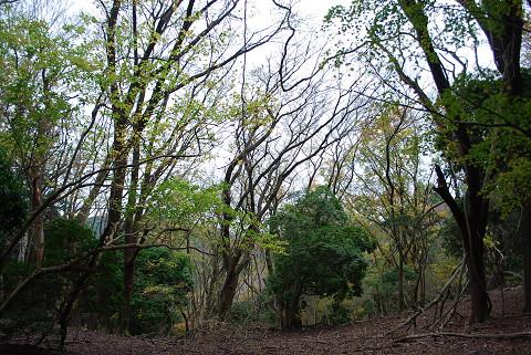 山頂の雑木林がきれい
