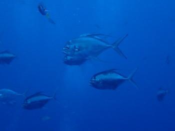 タオ島海ブログ