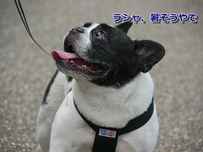 篠山 (6)