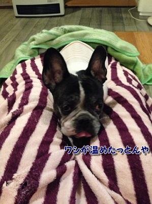 お休み (1)
