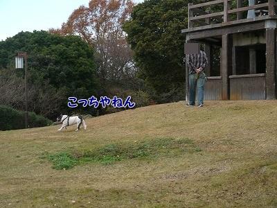 かくれんぼ (4)