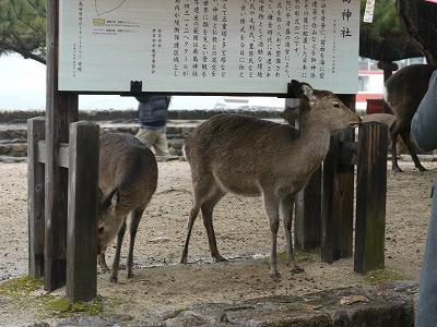 厳島神社2 (6)