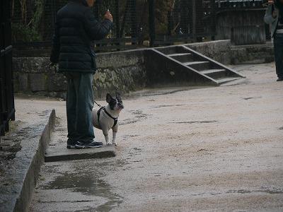 厳島神社3 (6)