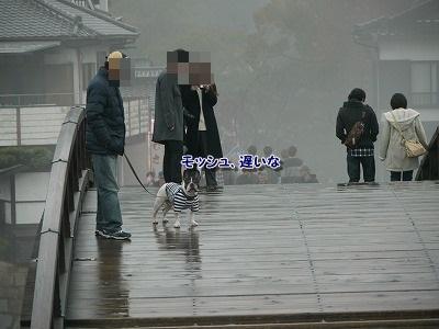 錦帯橋2 (5)