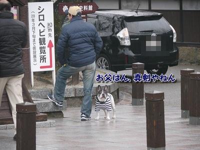 錦帯橋2 (7)