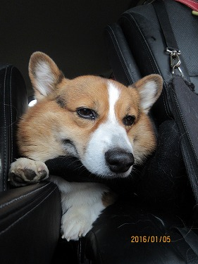 帰りの車内 息子