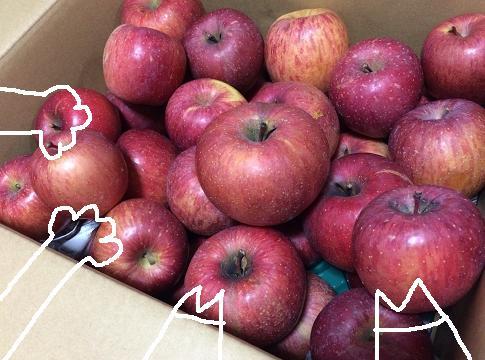 リンゴたくさーん