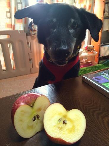 蜜入りリンゴ~