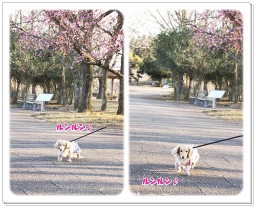 crea160226-9.jpg
