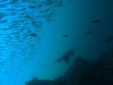 aksjflkajlfkajlfkjalkfdjalkjflakjfa (5)
