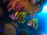 ajflkdjsalkjfalskjfalkjflakdjflakjflajdfljlkfjal (12)