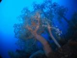 淡島ダイビング