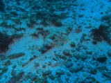 jfdsalkjfsalkjflkasjflkjasldkjsalkjfakj(1).jpg