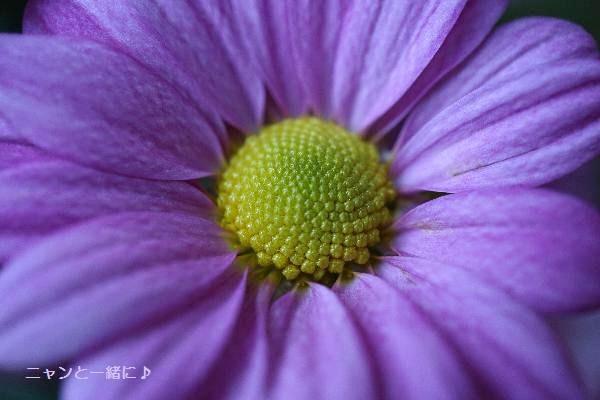 221マクロ花