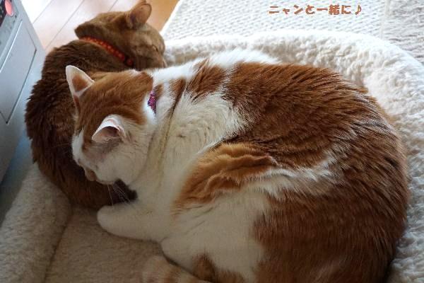cyakomakura123.jpg