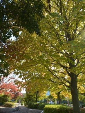 20151031_緑町公園のバラ10