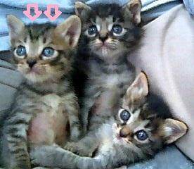 子猫4匹 12 - コピー