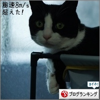 dai20150215_banner.jpg