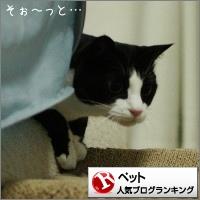 dai20151215_banner.jpg