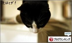 dai20160107_banner.jpg