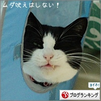 dai20160205_banner.jpg