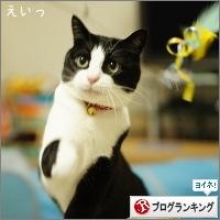 dai20160208_banner.jpg