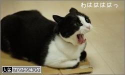 dai20160210_banner.jpg